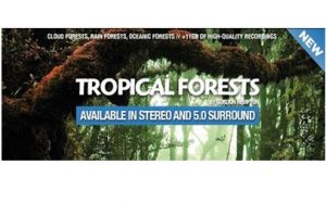 Boom Library - Tropical Forests